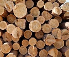 Деревянный сруб: цена строительства